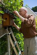 Nest box, man erecting House Sparrow terrace, Wiltshire, England, UK, model Henry Kilbey