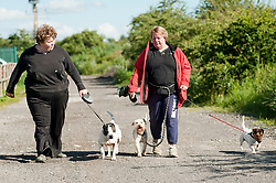 Volunteer Becky Morgan with Lisa Park Rotherham Dog Rescue's resident K9 Councillor walking rescue dogs Dylan, Rocky and Victor. <br /> 121129<br /> <br /> 11 July 2012<br /> Image © Paul David Drabble