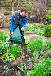 Mulching a border. Spreading compost using a tub trug.