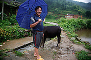 A man walks his cow in the village of Duntang in Daoxian County, Hunan Province, China, on 03 June, 2010.  Duntang was connected to the main electricity grid and began to receive regular supply of electricity only since the beginning of 2009.