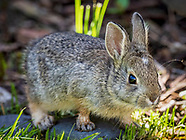 Rabbits, Rodents, & Other Small Animals