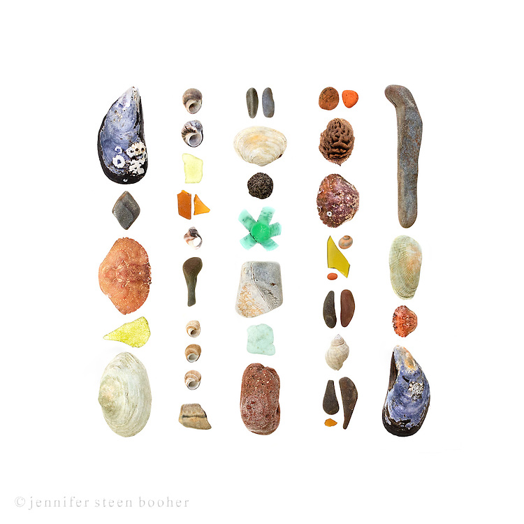 From left to right, top to bottom: <br /> Row 1: Blue Mussel (Mytilus edulis), beach stone (schist?), Rock Crab (Cancer irroratus), sea glass, Soft-shell Clam (Mya arenaria)<br /> Row 2: Common Periwinkle (Littorina littorea), sea glass, another periwinkle, beach stone, more periwinkle, beach stone<br /> Row 3: Beach stones, Soft-shell Clam, acorn cap (Quercus sp.), plastic shotgun wadding,  beach stone, sea glass, brick, <br /> Row 4: Brick, peach pit (Persica sp.), Green Crab (Carcinus maenas), Smooth Periwinkle (Littorina obtusata), sea glass, brick, beach stones, Dog Whelk (Nucella lapillus),  beach stones, sea glass<br /> Row 5: beach stone, False Angel Wing (Petricola pholadiformis), Green Crab, Blue Mussel