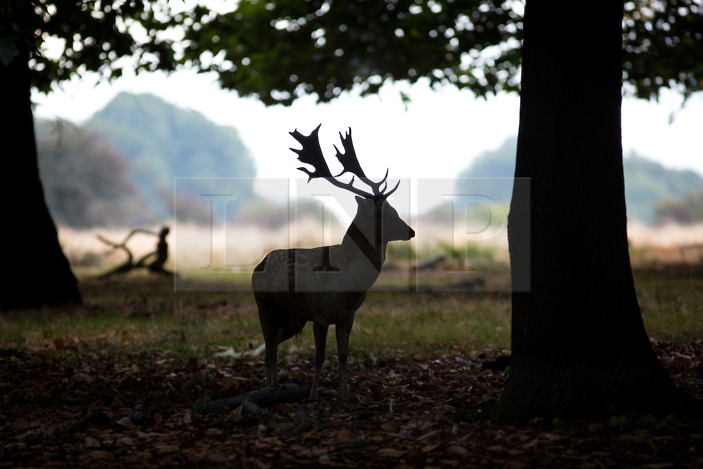 © Licensed to London News Pictures. 02/10/2016. London, UK. The silhouette of a male deer is seen at first light in Richmond Park on Sunday morning. The deer are in rutting season, where they are mating are particularly aggressive towards each other. Photo credit : Tom Nicholson/LNP