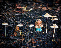 Troll investigating the morning mushrooms. Image taken with a Fuji X-H1 camera and 80 mm f/2.8 macro lens