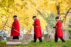 © Licensed to London News Pictures. 07/11/2018. London, UK. Three Chelsea Pensioners carry rakes in Brompton Cemetery as they begin the creation of a permanent wildflower meadow at the site of the Chelsea Pensioners' monument, as a tribute to the 2,625 Pensioners buried there. Photo credit: Rob Pinney/LNP