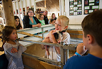 "Kayla shows off her one week old piglet ""Mr. Pearl"" to Corrina Beaulieu during Belmont's 4H Fair on Saturday.  (Karen Bobotas/for the Laconia Daily Sun)"