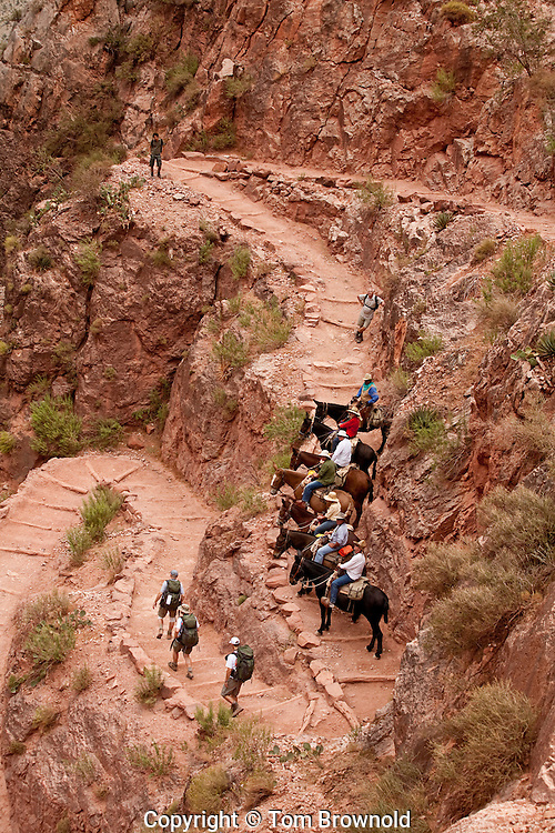 Both the pack and dude mules carry two hundredpounds maximum. The mules get rested for all theswitchbacks, giving the wrangler an opportunity tointerpret the natural history for his guests.