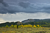 Dark storm clouds move over hills on the north side of Grand Teton National Park. The Snake River valley was filled with bright yellow cottonwood trees in mid-September.<br />