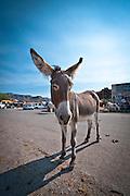 The mules run wild in Oatman, Arizona. Missoula Photographer