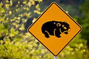 Wombat road warning sign, near Wollombi, Australia