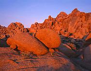 CADJT_114 - USA, California, Joshua Tree National Park, Sunrise reddens monzonite granite boulders near Jumbo Rocks.