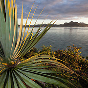 An endangered plant, Pandanus vandermeeschii, on Ile aux Aigrettes, a nature reserve on a small offshore islet in the Southeast of Mauritius. The Mauritian Wildlife Foundation runs short eco-tours out to the island so tourists can see the endangered wildlife and experience what Mauritius would have looked like before it was discovered by the Dutch.