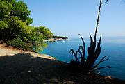Agave plant silhouetted against elevated view of beach Zlatni Rat, near Bol, island of Brac, Croatia
