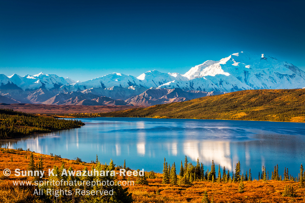 Mt. Denali (McKinley) reflects on Wonder Lake, surrounded with warm fall color tundra hill. Denali National Park & Preserve, Interior Alaska, Autumn.