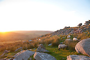 Rough Tor Minions Sunset and Sheep