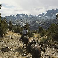 HORSE PACKING, Horse packer in Ansel Adams Wild. Mts.Ritter & Banner (Sierra)