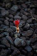 Nova Lima_MG, Brasil...Estacao Ecologica de Fechos em Nova Lima, Minas Gerais. Na foto detalhe de uma planta...Fechos Ecological Station in Nova Lima, Minas Gerais. In this photo a plant...Foto: JOAO MARCOS ROSA  /NITRO..