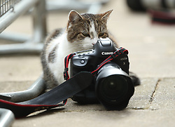 Larry the cat sat beside a photographer's camera, outside 10 Downing Street, London.