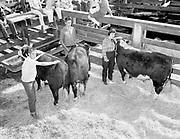 "ackroyd-08537-1. ""Portland Union Stockyards. 4-H Club Tour. September 5, 1958"""