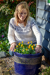 Checking with fingers whether an outdoor pot of violas needs watering during winter