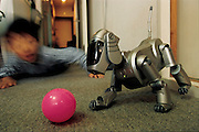 Seven-year-old Masahiko Nozue gets down on the floor and romps with AIBO, Sony's robotic pet dog. The Nozues had wanted a real dog, but pets are not allowed in their apartment. AIBO never needs to be fed, bathed, or walked, although it can simulate urination; it doesn't shed hair, bark at the neighbors, or need to be kept in a kennel when its owners go on vacation. Still, its behavior is so lifelike that the Nozues find it hard to treat it like a machine. One charge on its rechargeable battery lasts about two hours, and during that time AIBO is for all intents and purposes one of the family. Yokohama, Japan. From the book Robo sapiens: Evolution of a New Species, page 224-225.