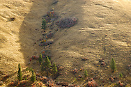 Parallel animal trails cover the Goat Mountain slope above Tumalum Creek, a tributary of the Tucannon River in the Blue Mountains, Garfield, County, WA, USA.