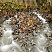 A seasonal creek flows after heavy autumn rains in the forest near North Cascades National Park, Washington.