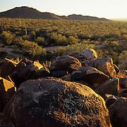 Ancient petroglyphs in Saguaro National Park,Tucson, Arizona.