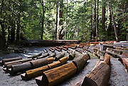 SUBJECT: Amphitheatre among the Redwoods in Big Basin State Park, CA. IMAGE: Seating made out of fallen sequoias is arranged in a clearing on a natural slope among the forest redwoods.