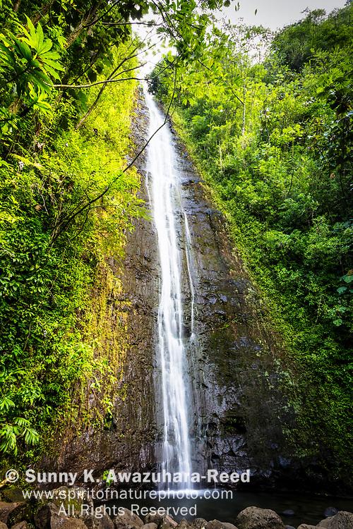 Manoa Falls with tropical foliage, Honolulu, Oahu Island, Hawaii.