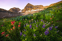 Hills full of lupine and indian paintbrush wildflowers shine in the early morning sun with Mt. Timpanogos rising in the background.