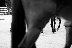 Legs<br /> Laiterie de Montaigu Trophy<br /> Longines Masters Paris 2016<br /> © Hippo Foto - Cara Grimshaw