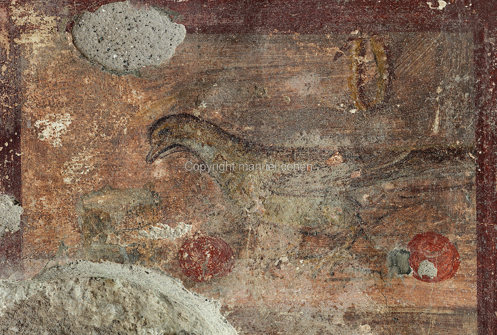 Fresco detail of a dove with fruit, from a small bedroom in the Casa dell Efebo, or House of the Ephebus, Pompeii, Italy. This is a large, sumptuously decorated house probably owned by a rich family, and named after the statue of the Ephebus found here. Pompeii is a Roman town which was destroyed and buried under 4-6 m of volcanic ash in the eruption of Mount Vesuvius in 79 AD. Buildings and artefacts were preserved in the ash and have been excavated and restored. Pompeii is listed as a UNESCO World Heritage Site. Picture by Manuel Cohen