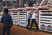 Junior Bulls