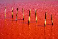 Wooden logs in red lake