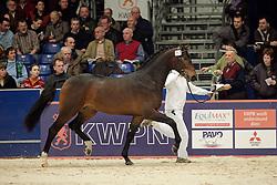717 - Wise Guy van de Wijdewormer<br /> KWPN Hengstenkeuring 2006<br /> Photo © Hippo Foto