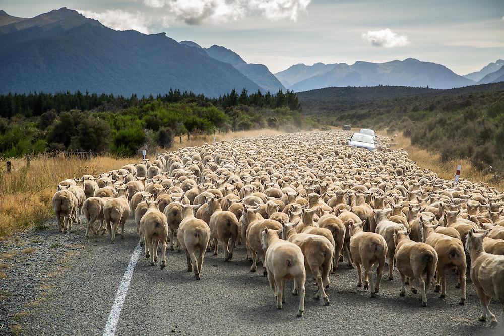 Traffic Jam, New Zealand Style
