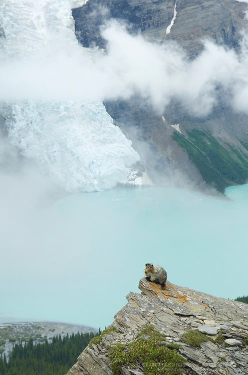 Marmot perched on rock with view of Berg Lake and Berg Glacier, Mt. Robson Provincial Park British Columbia Canada