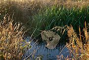 Golden spider web over creek