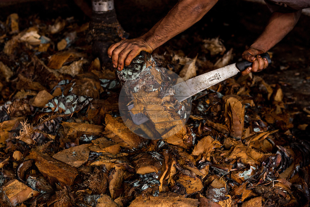 A worker chops roasted blue agave hearts with a machete at an artisanal Mezcal distillery November 5, 2014 in Matatlan, Mexico. Making Mezcal involves roasting the blue agave, crushing it and then fermenting the liquid.
