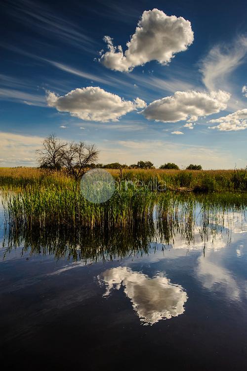 Parque Nacional de las Tablas de Daimiel. Ciudad Real ©ANTONIO REAL HURTADO / PILAR REVILLA