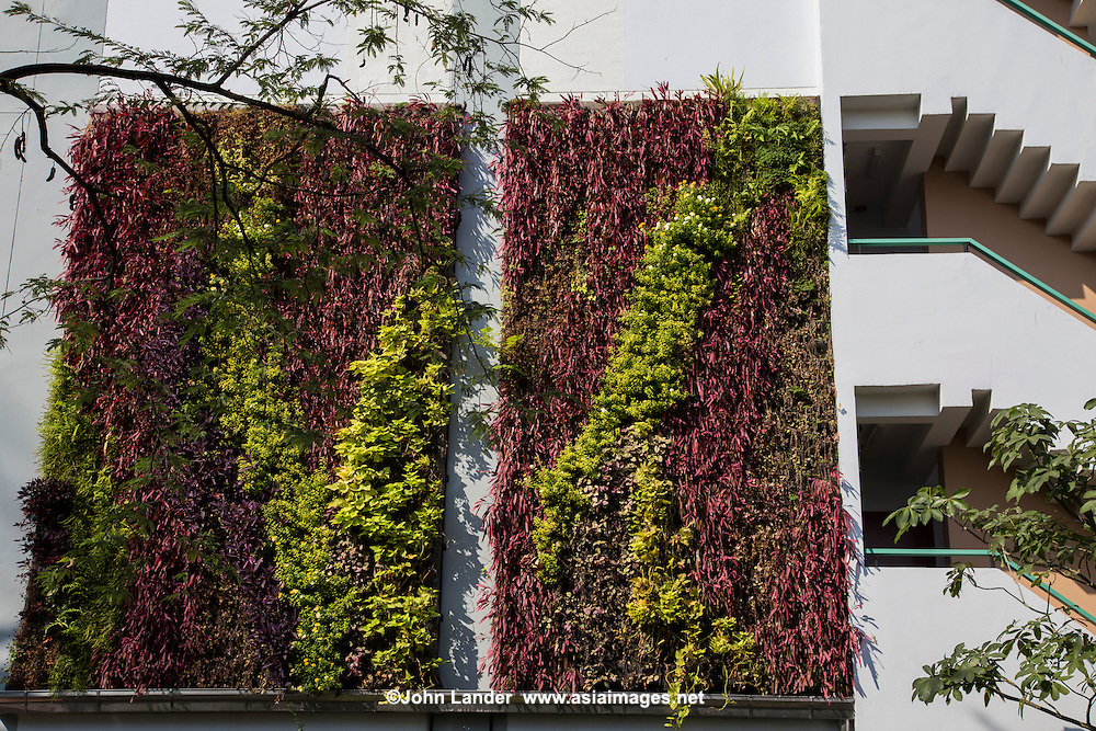 """Vertical garden green wall at Kasetsart University's woman dormitory.  Fans of vertical gardens or green walls say governments should provide incentives for green initiatives as they save energy consumption by reducing heat in buildings.  Unfortunately, high maintenance costs, expensive building material costs and lack of government support, means they are not widely used and are used more as """"greenwash"""" decorations rather than as a benefits to the environment."""