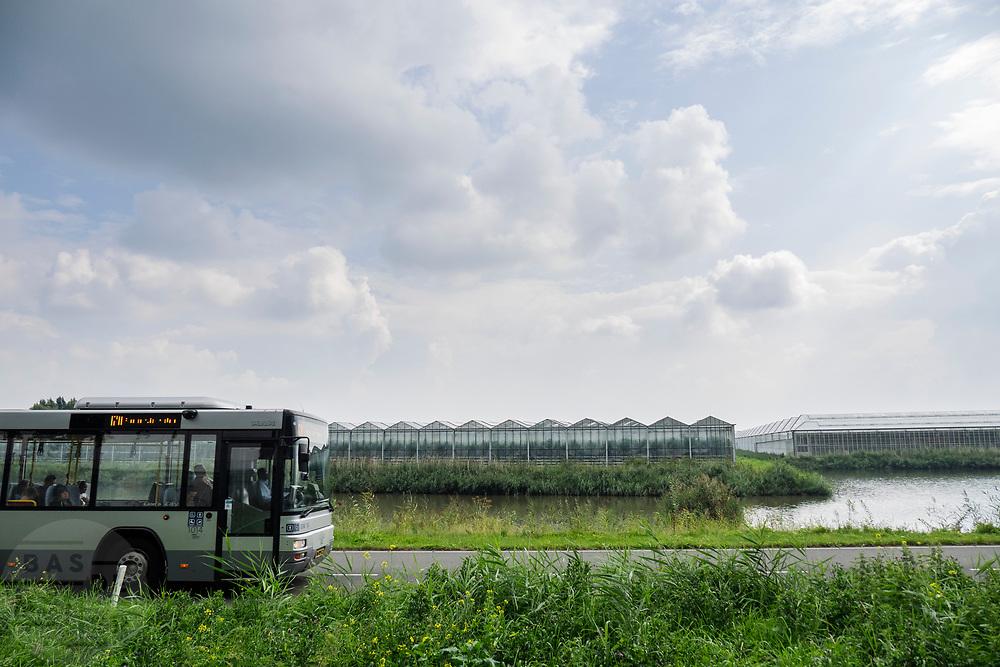 In Berkel en Rodenrijs passeert een streekbus de kassen waar bloemen worden geteeld.<br /> <br /> In Berkel en Rodenrijs a regional bus passes the greenhouses where flowers are grown.
