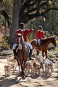 Huntsmen Jamie Green with his hounds during the start of the fox hunting season November 29, 2009 at Middleton Place plantation in Charleston, SC. The hunt is a drag hunt where a scented cloth is used instead of live fox