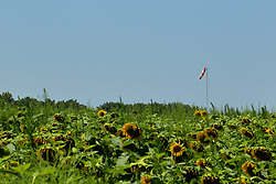 An airsock stands above a field of Helianthus or sunflowers L. is a strain of plants comprising about 70 species in the family Asteraceae.  These were found at Matthiessen State Park near Utica Illinois.