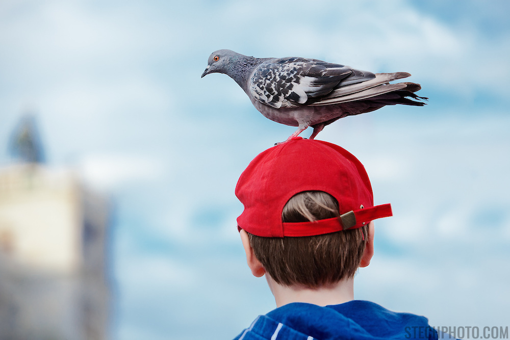 A friendly pigeon standing on the head of a young boy in St. Mark's Square (Piazza San Marco), Venice, Italy.<br /> <br /> + ART PRINTS +<br /> To order prints or cards of this image, visit:<br /> http://greg-stechishin.artistwebsites.com/featured/beacon-greg-stechishin.html