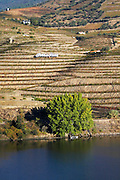 vineyards alves de sousa douro portugal