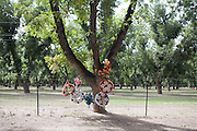 SCENIC Scenic views around southern New Mexico, including Pinon trees, Chile farms, arroyos, the Rio Grande River, cactus and roadside memorials for people killed in traffic accidents.