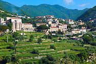 Vineyards near Ravello. Amalf Coast, Italy