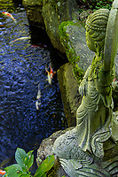 Pond Garden at Senyuji Temple - No. 58 on the Shikoku pilgrimage and one of the more impressively located pilgrimage templesstandingon a hillside 1,300 feet above sea level which means that pilgrims who walk to it have quite a climb. The guardian statues in the gateway below the temple are impressive. Behind the daishi-do is a flight of concrete steps which leads up into the hill behind the temple. This path passes through pleasant woods of evergreen and trees including sasa bamboo. It's lined at intervals with attractive Buddhist statues. The path leads to a hilltop with panoramic views of Imabari, the Shimanami-Kaido suspension bridge and the Seto Inland Sea. For this walk, sensible shoes are a must. Sadly In 1947, all of the buildings built by Kobo Daishi between810-824 burned down in a forest fire. They were rebuilt from 1953. Senyu-ji is one of six pilgrimage temples located relatively close together in Imabari.